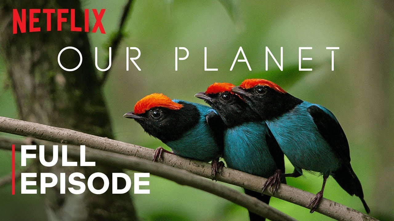 """""""One Planet"""" – episode 1 from the series of documentaries """"Our Planet"""""""
