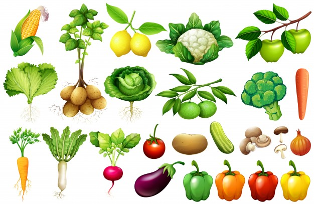 The names of vegetables
